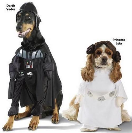 Star_Wars_Animals_in_Costumes_23
