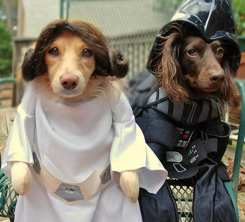 Star_Wars_Animals_in_Costumes_1