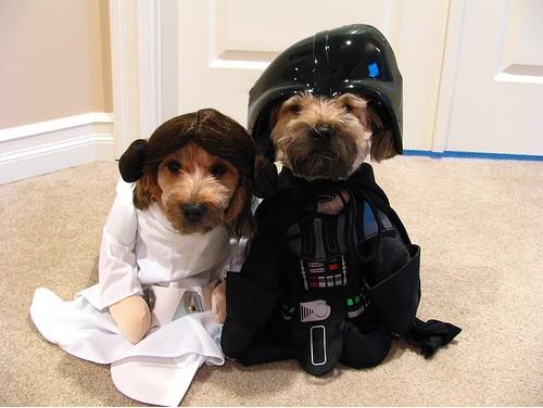 Star_Wars_Animals_in_Costumes_25
