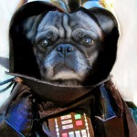 Star_Wars_Animals_in_Costumes_3
