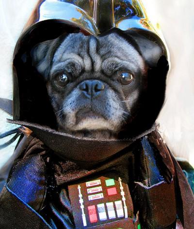 Star_Wars_Animals_in_Costumes_3