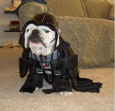 Star_Wars_Animals_in_Costumes_4
