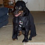Star_Wars_Animals_in_Costumes_5
