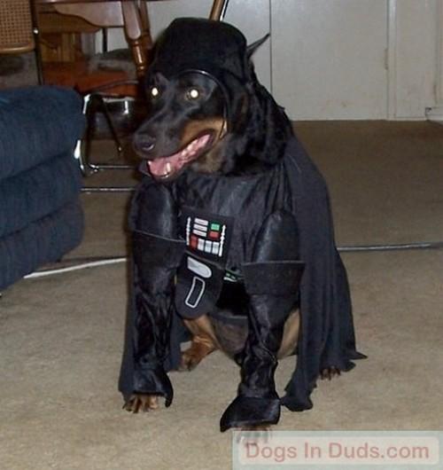 Star_Wars_Animals_in_Costumes_5