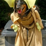Star_Wars_Animals_in_Costumes_8