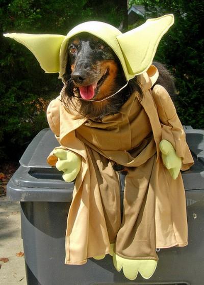 Star_Wars_Animals_in_Costumes_8