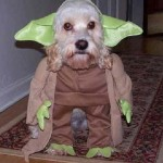 Star_Wars_Animals_in_Costumes_9