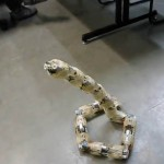 3-D Printed Robotic Snake 2