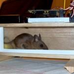 Crazy_Mousetraps_4