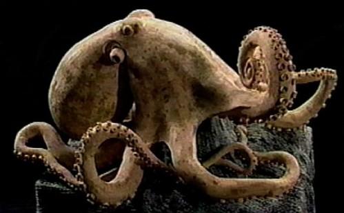 Freaky_Octopus_Creations_16