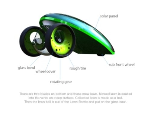 Lawn Beetle 1