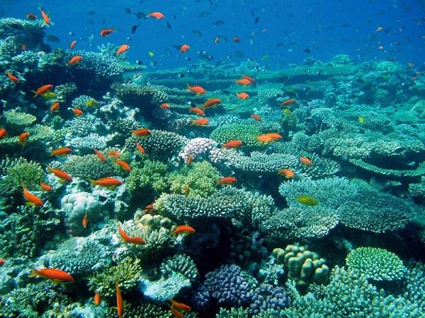 coral sunscreen pill