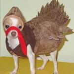 funny dog custome 3