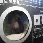 Boom Box for Cats