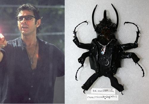 dr malcolm beetle
