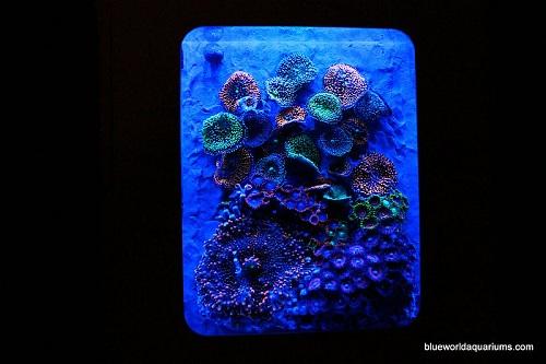 xbox 360 aquarium mod diy coral
