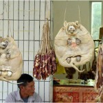 Preserved Dogs in China