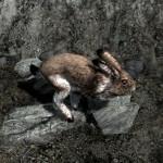 Skyrim Rabbits