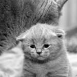 Sad Kitten 1