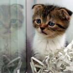 i_are_sad_kitten