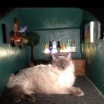cat_at_at_inside