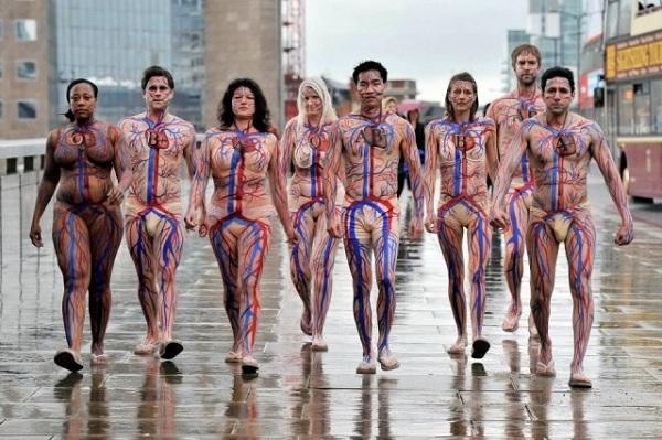 Circulatory System Body Art 3 Walyou