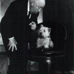 Alfred Hitchcock Dog