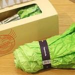 lettuce-vegetable-umbrella-1