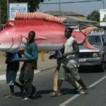 Pink fish Coffin
