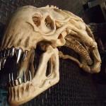 xenomorph-skull-1