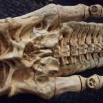 xenomorph-skull-3