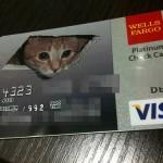 Ceiling Cat Credit Card