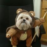 Dog Ewok