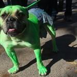 Dog Hulk