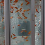 Goldfish Phone Booth 2