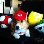Mario Dog