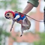 Tiny Spider-Man