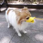 quack-muzzles-2