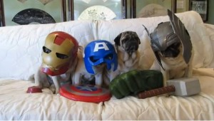 The Avengers - Pugs Version