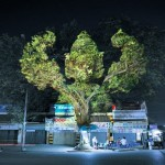 3D Projections of Deities Onto Trees 3