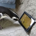 penguin ipad game 1