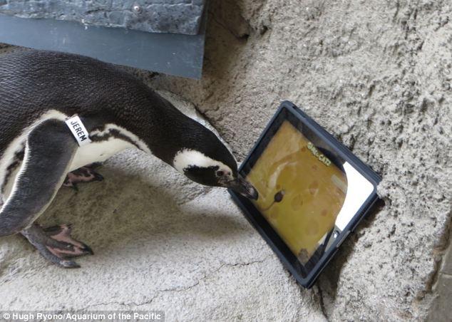 penguin ipad game 1