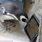 penguin ipad game 2