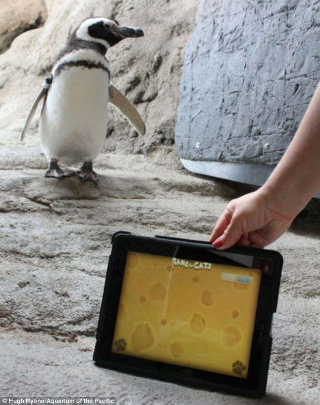 penguin ipad game 3