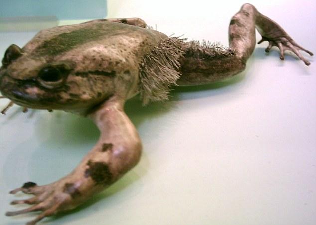 wolverine frog 1