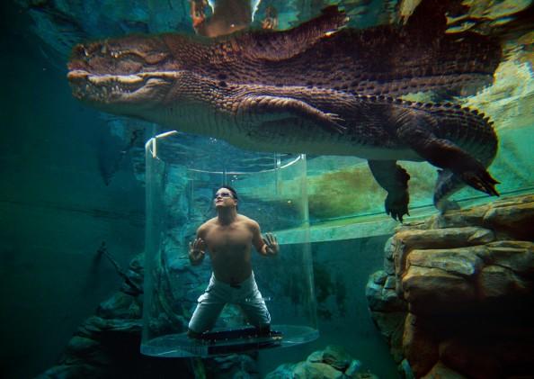 Crocosaurus Cove Pool