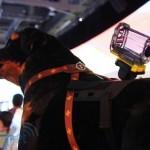 Sony Action Cam Pet Mount