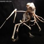bones-cthulhu-2