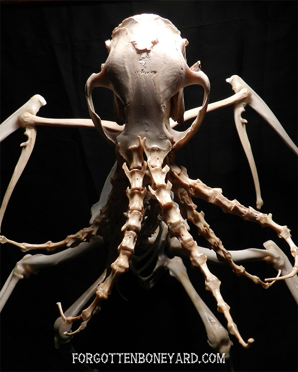 bones-cthulhu-1