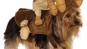 star-wars-dog-costumes-1